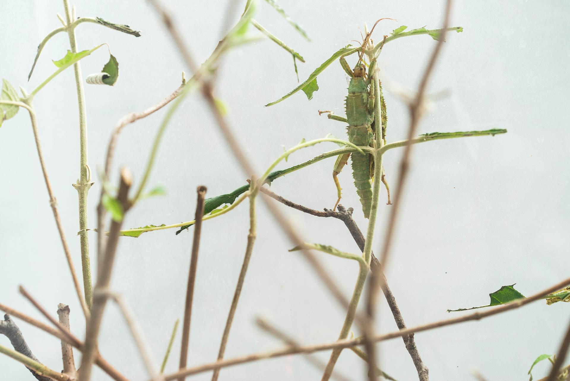 Blair Leano- Helvey bugs